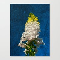 White Foxglove Flowers … Canvas Print