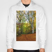 Autumn Trees Woodland Hoody