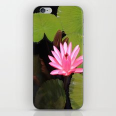 pink lily pad flower iPhone & iPod Skin