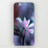 Phlox iPhone & iPod Skin