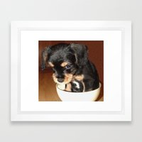 Dog in a Dish (Bashful Bertie) Framed Art Print