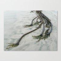 Seaweeds One Canvas Print