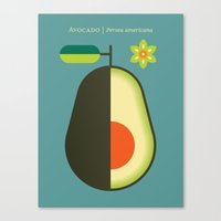 Fruit: Avocado Canvas Print