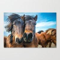 Icelandic Horses Canvas Print
