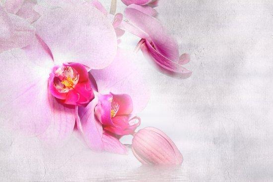 Colurful Orchid Art Print