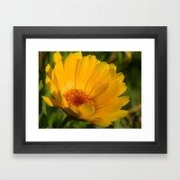 Yellow Daisy Flower Framed Art Print
