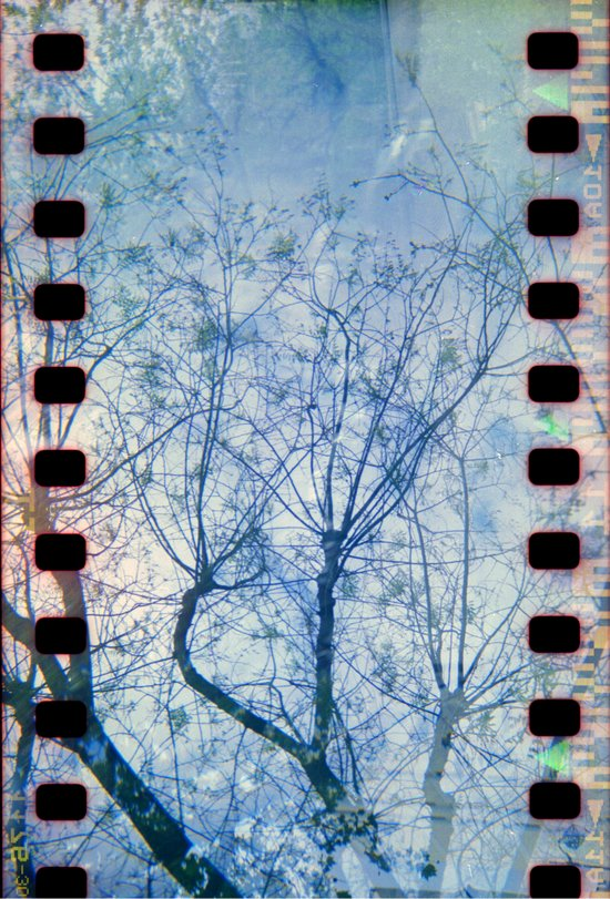 Blue Winter Blossoms  Canvas Print
