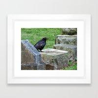 Cemetery Raven  Framed Art Print