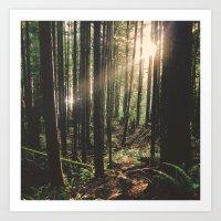 Sun In The Rainforest Art Print
