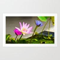 Lotus Flower Morning Art Print