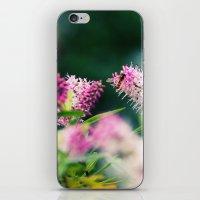 Summer Delight iPhone & iPod Skin