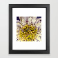 Flower Purple Yellow Framed Art Print