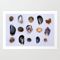 English Seashells Art Print