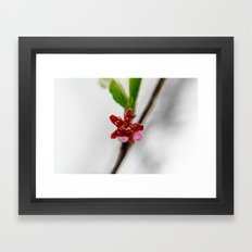 Red peach blossom Framed Art Print