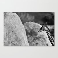 Whiteout - Giraffe Canvas Print