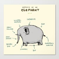 Anatomy of an Elephant Canvas Print