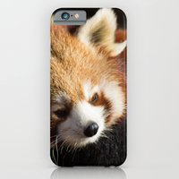 Ailurus Fulgens iPhone 6 Slim Case