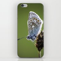 Common Blue Butterfly 2 iPhone & iPod Skin