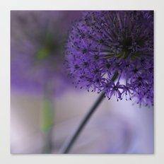 purple allium Canvas Print