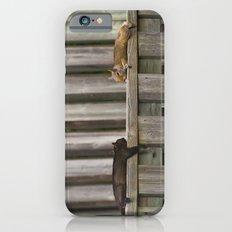 Squirrels Chilling iPhone 6 Slim Case