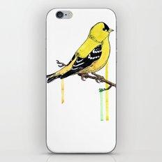 Goldfinch iPhone & iPod Skin