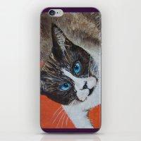 Rastus The Snowshoe Cat iPhone & iPod Skin