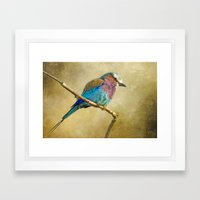 Lilac Breasted Roller Framed Art Print