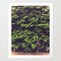Prairie Redwoods Fern Gully Art Print