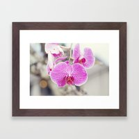 Orchid Hush  Framed Art Print