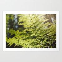 Sun Leaf Art Print