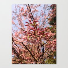 Spring comes suddenly Canvas Print