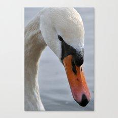 Swan portrait 2 Canvas Print