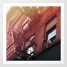Man In Window - New York City - Photograph Art Print