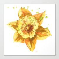 Easter Daffodils, flowers, flower watercolors, flower cushions, spring, easter,  Canvas Print