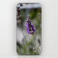 lavendar iPhone & iPod Skin