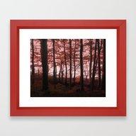 Autumn In The Woods 4 Framed Art Print