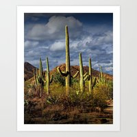 Saguaro National Park Ne… Art Print