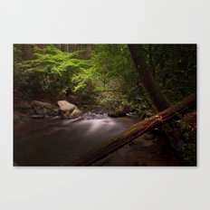 Bear Creek Canvas Print