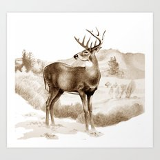 White-tailed Stag Sniffing the Air Art Print