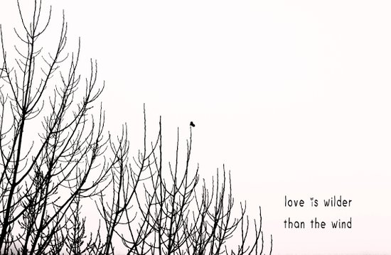 love is wilder than the wind Art Print