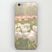 Tulips sunbathed iPhone & iPod Skin