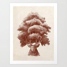 Old Growth  Art Print