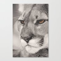 Cougar II Canvas Print