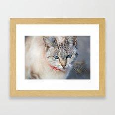 Meow Meow Meow Framed Art Print