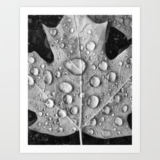 Raindrops on Fallen Leaf Art Print