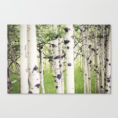 Aspen Eyes Canvas Print