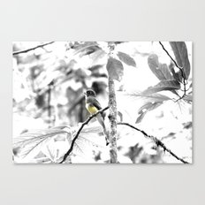 Yellow-Bellied Canvas Print