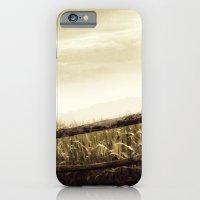 Corn Sky iPhone 6 Slim Case