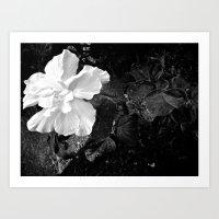 White Silk Art Print