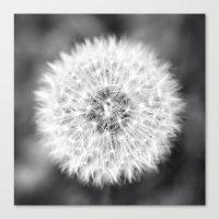Black & White Dandelion Canvas Print